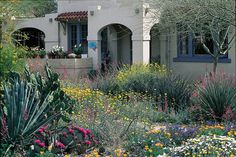 A variety of wildflowers and cacti provide vibrant color in the springtime