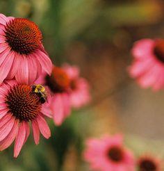 Animais benéficos ao jardim   Hortas e Saberes   Cursos sobre ervas, temperos e especiarias