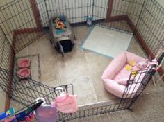 Small Breed Puppy Set Up