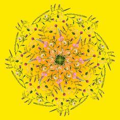 Summer Solstice I Wild Flower Mandala By Maria Silmon