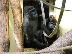 Unsere Gorillagruppe