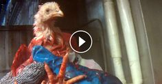 ANYONE WHO CONSUMES THIS PRODUCT SHOULD TAKE THE TIME AND WATCH THIS DISTURBING VIDEO!!!!!!  Tyson and Six Workers Face 33 Counts of Animal Cruelty Following MFA Investigation  Mercy For Animals Oct 30, 2015 — Tyson Foods and six of its slaughterhouse workers face charges of 33 counts of criminal animal cruelty after they were captured on hidden camera by a Mercy For Animals investigator violently punching, throwing, and maliciously torturing animals for fun.