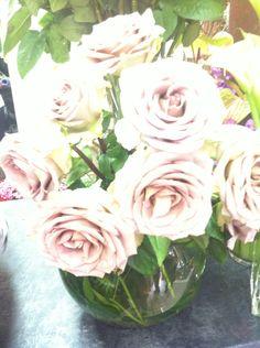 Rosas rosa palo