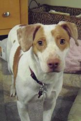 Amelia was adopted from Wags & Whiskers Animal Rescue of MN.   www.WagsMN.org