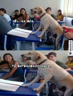Deve tá na aula de matemática Dog Memes, Funny Memes, Funny Dogs, Funny Animals, English Memes, Marvel Characters, Funny Cute, Nostalgia, Funny Pictures