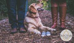 Return the loyalty! Treat your furry family members to our CBD-rich pet drops and/or treats today! www.BuyNectarCBD.com #nectarcbd #cbd #cbdoil #cbdnectar #nectarsweet #nectaroil #hemp #hempextract #hempoil #fullspectrum #distillate #sustainable #organic #cannabis #farming #colorado #science #nature #natural #healthy #petcbd