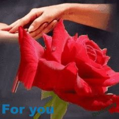 O desejo é uma árvore com folhas; a esperança, uma árvore com flores; o prazer, árvore com frutos. Guilherme Massien