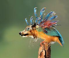 Funny Dog,Bird n Lizard Fish.........