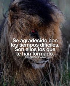 creeenti vivir negocios caballero finanzas ingresos Motivational Phrases, Inspirational Quotes, Lion Quotes, Truth Of Life, Spanish Quotes, Quotes About God, Sentences, Philosophy, Best Quotes