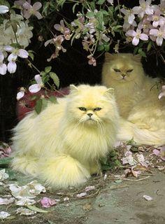 Was für ein tolles Bild, schöne Katzen, schöner Platz
