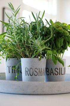 Fresh herbs www.greennutrilabs.com