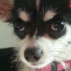 This look. Wee Ivy Rose