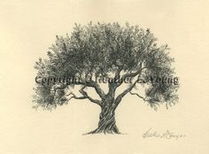 Olive Tree Drawing Pen and Ink Fine Art Print on by theinklab, $30.00