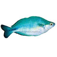 Pinterest the world s catalog of ideas for Petsmart fish guarantee