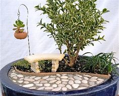 Miniature Fairy Gardens Plants | Miniature Garden Kit for Fairy, Indoors, Outdoors Plants, Trees and ...