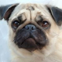 All Pet Portraits are only $99, including a print of up to 12x16.  www.portraitsbymarc.com