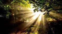 sunlight - (#51646) - HD Wallpapers - Nature HQ Wallpapers on WallsInHD.com