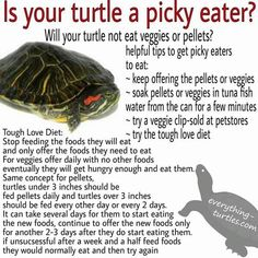 Are you thinking of buying a tortoise to keep? Tortoise pet care takes some planning if you want to be. Turtle Aquarium, Turtle Pond, Turtle Care, Pet Turtle, Turtle Basking Platform, Freetime Activities, Turtle Terrarium, Turtle Enclosure, Red Eared Slider Turtle