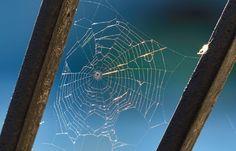 #Spinnennetz im #Abendlicht