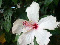 Romantic Flowers: White Flowers