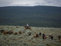 Paws Up is a working cattle ranch that blends luxury and camping in a big way.