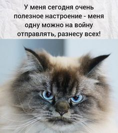 Russian Jokes, Funny Expressions, Great Philosophers, Just Kidding, Cool Words, Cats And Kittens, Psychology, Funny Pictures, Cute Animals