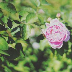久しぶりに花を撮影してみました きれいなものを写す時はよりきれいに写したいといろいろ考えますね . 写真を見てよかったらいいねやコメントをもらえるとうれしいです . . #写真好きな人と繋がりたい #写真撮ってる人と繋がりたい #カメラ好きな人と繋がりたい #ファインダー越しの私の世界 #フォロー #写真部 #関西写真部 . #IGersJP #followme  #instafollow #tagforlikes  #follow4follow #webstagram #likeforlike #japan #instagood #モデル募集 #팔로우 #맞팔 #찍스타그램 . コンテストタグ #WeekendHashtagProject . #PhotoOfTheDay . #JapanHashtagProject . #instaderby . #フォトコンテストOsaka2015 . #WHPhideandseek .