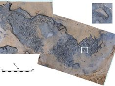 Vertical image at Happisburgh with model of footprint surface produced from photogrammetric survey with photo of footprint 8 showing toe impressions. Image credit: Happisburgh Project. The first known Britons who lived near Happisburgh in Norfolk on an ancient course of the river Thames, over 800,000 years ago. This early settlement in Britain of human presence in Northern Europe. Until recently the earliest finds of human habitation in Britain were dated 500,000 years ago.
