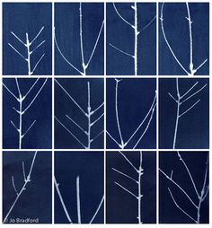 Jo Bradford STEM cyanotype photograms, an antiquated photo-printmaking technique that predates the invention of photography.