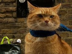 With his uplifting tale of friendship with a homeless man charming thousands, Bob the busker cat is heading for Hollywood.