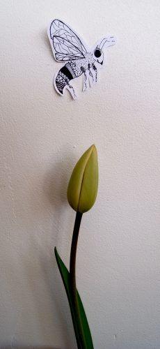 Art by Aastrøm - aastrom.dk #illustration #tulip #bee