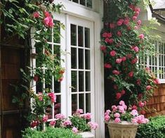 172 imágenes sobre Spring en We Heart It | Ver más sobre flowers, spring y nature Climbing Roses, Spring, Find Image, We Heart It, Outdoor Structures, Staircases, Windows, Doors