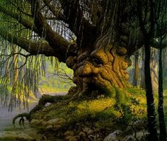 """This keeper of the forest seem to be breaking out in warts . """"it's the frogs"""", he thinks to himself, """"they think I look better with warts"""". When will they remember I'm a TREE? Weird Trees, Spooky Trees, Enchanted Tree, Tree People, Tree Faces, Tree Carving, Old Trees, Unique Trees, Tree Roots"""