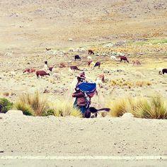 Into the wild - Peru - Latin America - Travel - llama - mujer - women - traditional