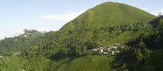 Darjeeling Tea Garden Bhutan