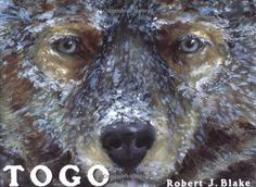 Togo by Robert J. Blake http://www.amazon.com/dp/0399233814/ref=cm_sw_r_pi_dp_b0uUub0C830XA