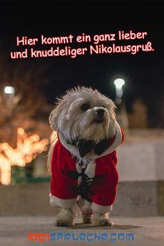 Christmas Cats, Merry Christmas, Winter Love, Christmas Wishes, Dog Cat, Cartoon, Adventure, Funny, Animals
