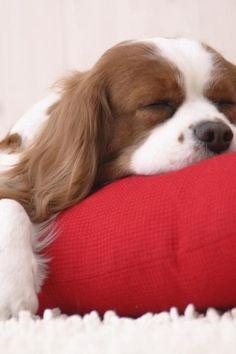 156 Best Cute Sleeping Animals Images Cut Animals Cutest Animals