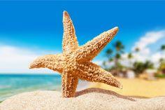 W ramach wyjazdu na #WAT wybierasz się na Florydę? Masz szczęście! Czekają na Ciebie plaże jak z bajki - a my opisaliśmy dla Ciebie 8 najpiękniejszych! https://1globe.pl/work-and-travel-2016-floryda/ #workandtravel #workandtravelusa #wat2016 #usa2016 #selfplacement #lastminute #zapisy #watusa #joboffers #praca #pracausa #ofertypracy