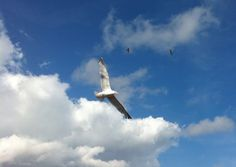 A lot of gulls in the sky #gull #sky #brighton #england #cloud