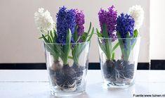 DIY: Utiliza la vajilla como maceta para tus bulbos  |   Tuinen.es