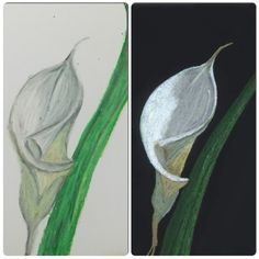 White lily (I did the one on the left again) :)