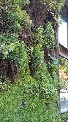 Toujours en admiration devant le mur végétalisé du quai Branly #murvegatilise