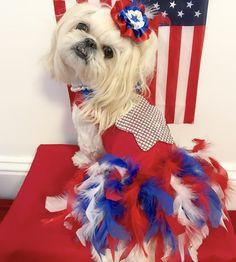 Bella wearing her Patriotic Dress & Fascinator that I made ( Bella Model, Patriotic Dresses, Fascinator, Holidays, Dogs, How To Wear, Fashion, Moda, Headdress