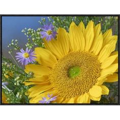 Global Gallery Common Sunflower and Asters, North America by Tim Fitzharris Framed Photographic Print on Canvas Size: