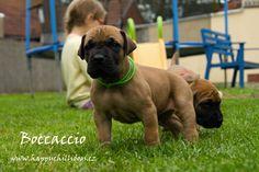Boccaccio Happy Chilli Dogs www.happychillidogs.cz