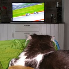 Watching the grand prix of Mugello... go rossi !!!!!! #persian #persiankitten #persianlove #persiancats #persiancat #kitten #cat #cats #catsaresuchdicks #catstagram #catsoninstagram #catsofinstagram #meow #caturday #blackandwhitecat #greycat #fluffycat #fluffy #kitty #instakitty #kittensofinstagram #meowbox #cats_of_instagram #petlover #pets #catlover #catlovers #vr46 #motogp #forzavale by captain_blackbeard_finley http://www.australiaunwrapped.com/