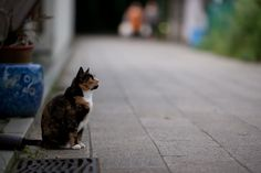 Cat & Domo  アルファ事件さんの作品