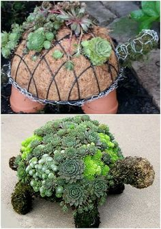 How To Make A Succulent Turtle . This is SO cute! diy garden art How To Make A Succulent Turtle Succulent Gardening, Planting Succulents, Container Gardening, Planting Flowers, Succulent Plants, Succulent Ideas, Succulent Terrarium Diy, Ikea Terrarium, Garden Terrarium