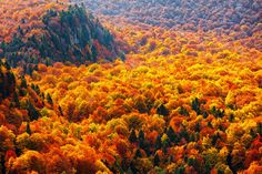 The autumn forests of Steneto reserve in Balkan Mountains, Bulgaria  #travel-paradise divine